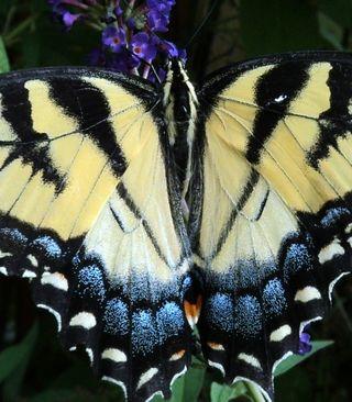 Butterfly 081210 (2)