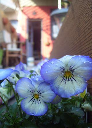 Flora 041510 061