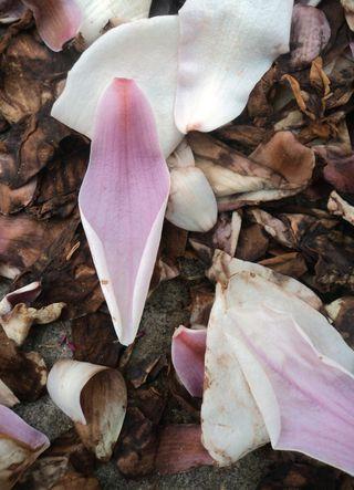 Flora 041211 (1)