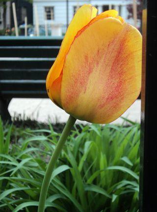 Flora 042111 (1)