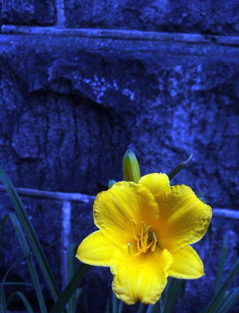 Flora 060111 (2)