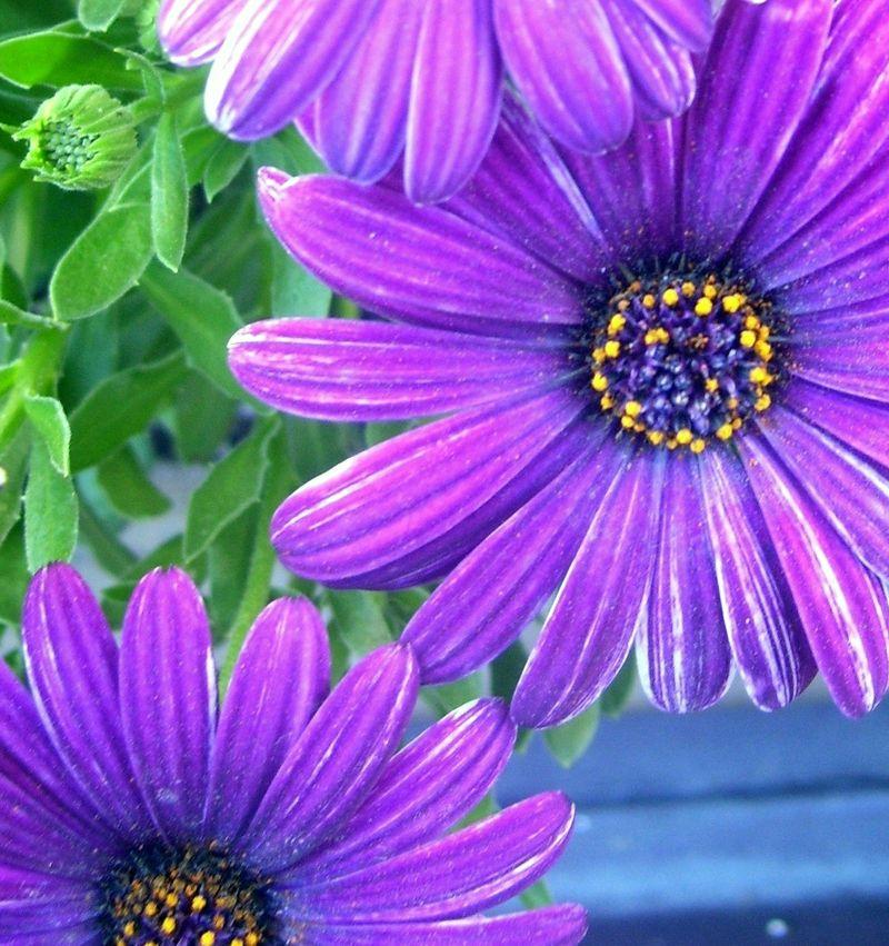 Flora 040610 048