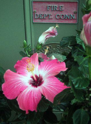 Flora 092811