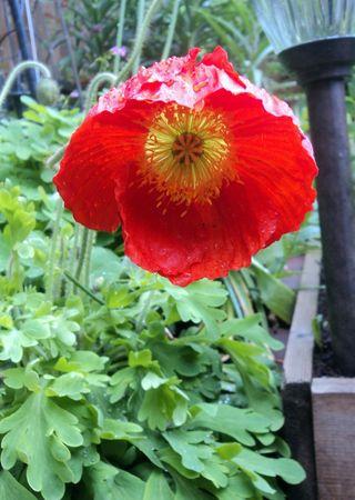 Flora 050111