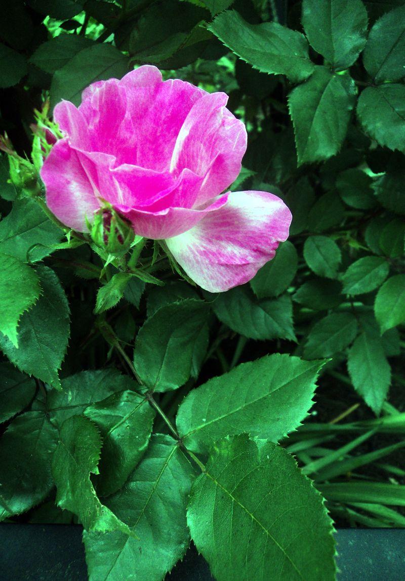 Flora 051311